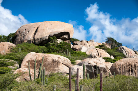 rock formations: Cactus growing on the Ayo Rock formations, a group of monolithic rock boulders near Ayo village in Aruba in the Caribbean