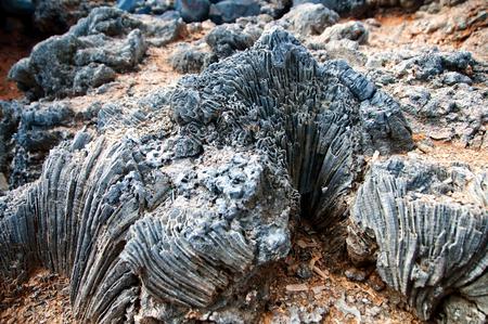 mare agitato: Weathered formazione rocciosa costiera mostrando formazioni coralline resistenti e strati minerale in un modello o creste Archivio Fotografico