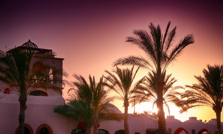 Palm Trees and Building in front of Setting Sun, Egypt with Purple Sky photo