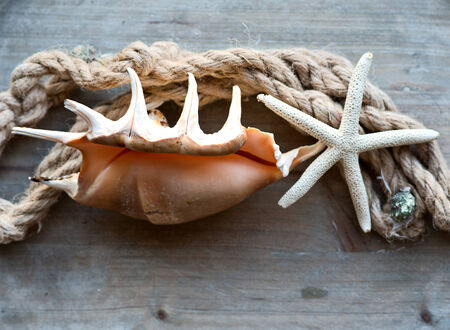 knotting: Seashell and Starfish with Rope on Wooden as seen from Above