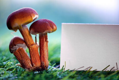 Toadstools with a blank card on green grass with a blue sky with sunshine flare, copyspace for your text photo