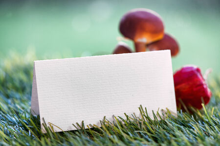 Still Life of Blank Place Card with Mushrooms on Grass with Selective Focus photo