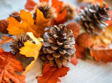 pomme de pin: Close Up de Pomme de pin Still Life parmi les feuilles d'automne avec mise au point sélective