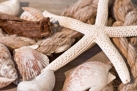 Maritime background with Close Up of Seashells and Starfish with Rope Still Life