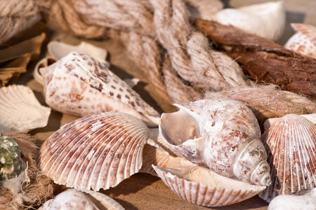 mementos: Maritime background with Assortment of Seashells with Rope Still Life