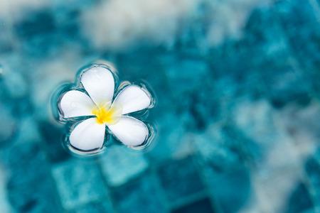 Simple Serene Plumeria fleurs flottant sur l'eau bleu clair en vue de dessus