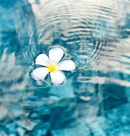 wellness: Single Peaceful Plumeria Flower Floating on Clear Rippling Water
