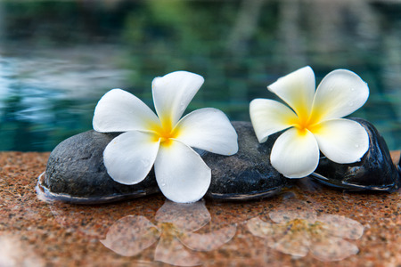 tropical shrub: Two Plumeria Flowers on Row of Stones at Edge of Pool in Peaceful Spa Setting Stock Photo