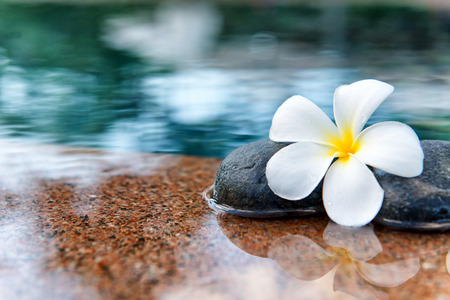 Single Plumeria Flower on Stones at Edge of Pool in Tranquil Spa Setting