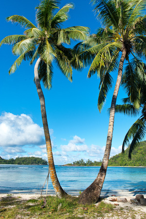 Close up Palm Trees at Beautiful Anse l Islette Beach in Mahe Island, Seychelles photo