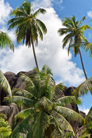 eagle nest rock: Palm Trees Against Cloudy Blue Sky on Eagle Nest Mountain, La Digue, Seychelles