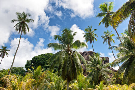 eagle nest rock: Scenic view of palm trees and lush green tropical vegetation in front of Eagles Nest Mountain, La Digue, Seychelles Stock Photo
