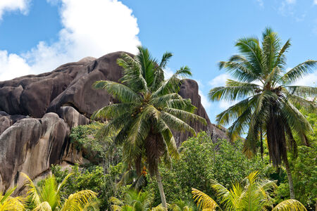 eagle nest rock: View of Eagles Nest Mountain, La Digue, Seychelles amongst verdant green tropical vegetation and palm trees under a sunny blue sky