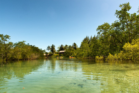 clear water: Tour at Clear Water Lagoon with Mangrove Trees on the Sides at Port Launay Marine National Park, Seychelles.