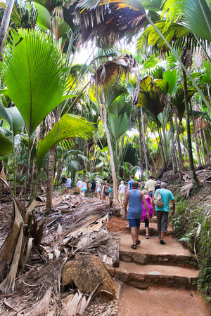 lobed: Group of tourists walking through a Coco de Mer palm forest, a palm tree indigenous to the Seychelles, growing in the Valle de Mai National Park on Praslin Stock Photo