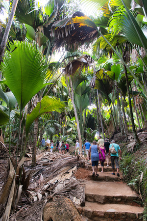lobed: Tourists sightseeing in the Valle de Mai National Park on Praslin, Seychelles