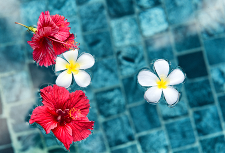 fragile peace: Plumeria and Hibiscus Flowers Floating on Surface of Clear Water Stock Photo