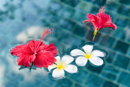 Plumeria and Hibiscus Flowers Floating on Surface of Clear Water Фото со стока