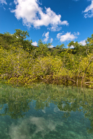 Coastal mangrove swamp off Mahe, Seychelles at Port Launay with the foliage of the trees overhanging a tranquil sea photo