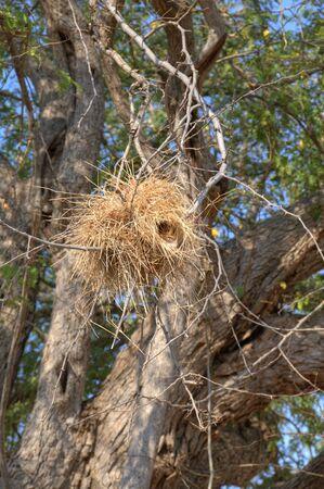nido de pajaros: Jerarqu�a de los p�jaros en el �rbol