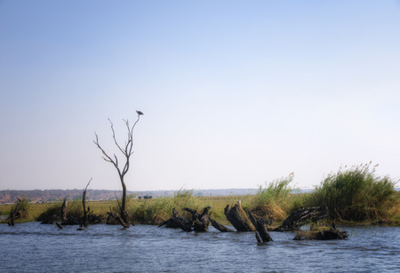 chobe: Landscape in Chobe National Park, Botswana, Africa