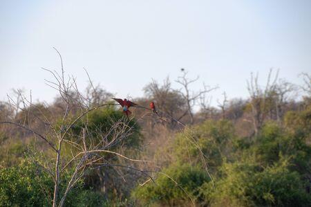 chobe national park: Birds perching on tree branches in Chobe National Park, Botswana, Africa Stock Photo