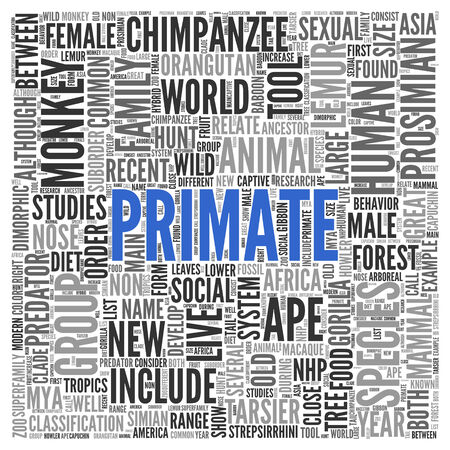 primate: Close up Blue PRIMATE Text at the Center of Word Tag Cloud on White Background.