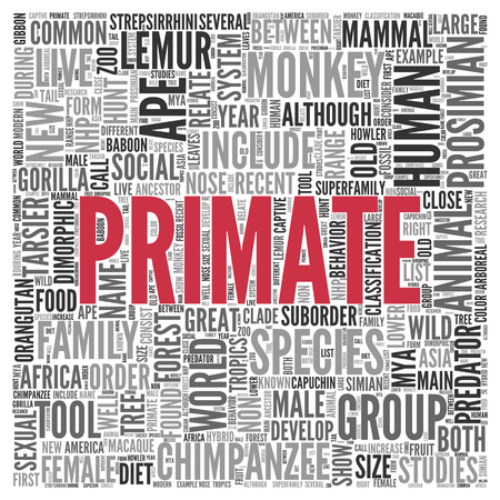 primate: Close up Red PRIMATE Text at the Center of Word Tag Cloud on White Background.