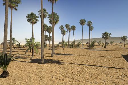 sandy soil: Arido parco tropicale di nuova paesaggistico con una variet� di palme nel terreno sabbioso sotto un caldo sole estivo