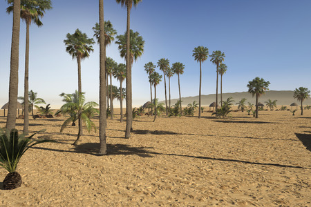 Newly landscaped arid tropical park with a variety of palm trees in sandy soil under a hot summer sun