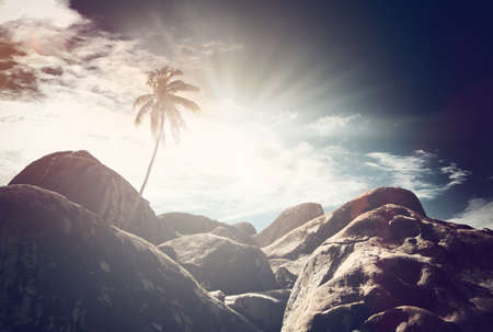 atmospheric: Atmospheric view of a single palm tree and rocks under a dark dramatic sky with sunburst at sunrise on Virgin Gorda, British Virgin Islands, Caribbean