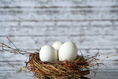 incubation: Close up Shot of a Conceptual Three Whole White Chicken Eggs in a Nest with Fuzzy Background.