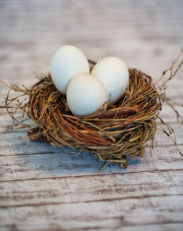 incubation: Close up Shot of Conceptual Three White Whole Eggs in a Birds Nest on Top of a White Wooden Table.