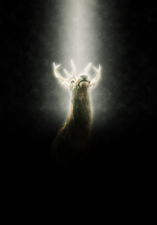 evocative: Low Angle View of Buck Male Deer Illuminated in Spotlight with Dark Black Background
