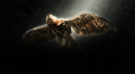 Panoramic Low Angle View of Golden Eagle Flying Illuminated with Bright Spotlight on Dark Background