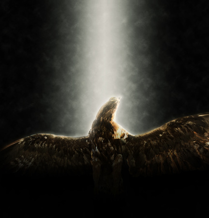 Low Angle View of Underside of Golden Eagle Flying with Wings Extended Illuminated by Bright Spotlight on Dark Background with Copy Space