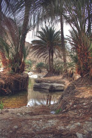 bani: Wadi Bani Khalid Oasis Covered in Vines and Surrounded by Palm Trees, outside Muscat, Oman