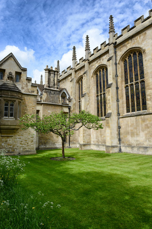 isaac newton: Lone Chestnut Tree in Tudor-Gothic Style New Court at Trinity College, University of Cambridge, England - Popular Tourist Attraction and Rumored to be Isaac Newton Apple Tree