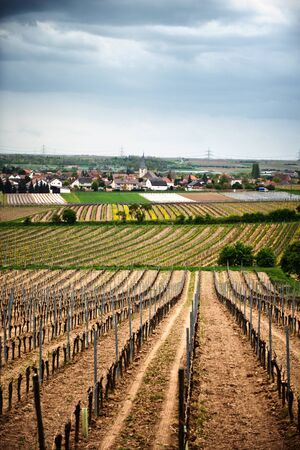 wine road: Scenic landscape view of neatly cultivated spring vineyards in Laumersheim, Germany under a cloudy sky