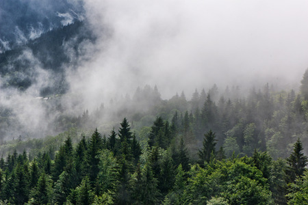 Low lying mist or cloud over evergreen forests in an atmospheric ethereal landscape