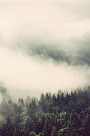 vertical: Bosques de hoja perenne en las laderas de las montañas envueltas en la nube baja para un paisaje de ensueño, visión vertical Foto de archivo