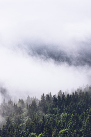 Low lying cloud over evergreen forests clinging to the sides of the mountain in an atmospheric nature background Stock Photo