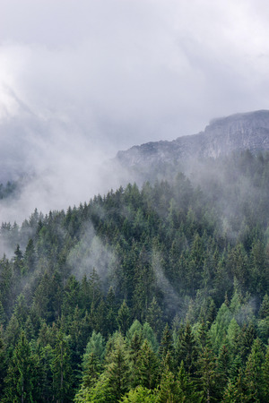 Scenic alpine landscape with coniferous evergreen forest and lush vegetation on the mountains under mist and clouds, at high altitude Фото со стока