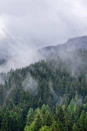 Toneel alpien landschap met naald altijdgroene bos en weelderige vegetatie op de bergen onder mist en wolken, op grote hoogte