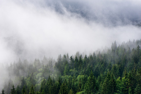 pine green: Low lying cloud over evergreen forests clinging to the sides of the mountain in an atmospheric nature background Stock Photo