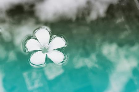 Simple Serene Plumeria Fleur flottant sur le bleu clair de l'eau en vue de dessus Banque d'images