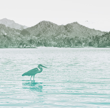 grey water: Side View of Grey Heron Wading in Water at Port Launay Marine Park, Seychelles Stock Photo