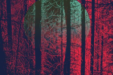coniferous forest: Red Toned Image of Bare Tree Trunks in Evergreen Forest with Green Moon and Eerie Quality, Ideal for Backgrounds