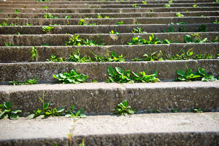 recedes: Green weeds sprouting through the cracks in a set of stone exterior steps in an overgrown environment
