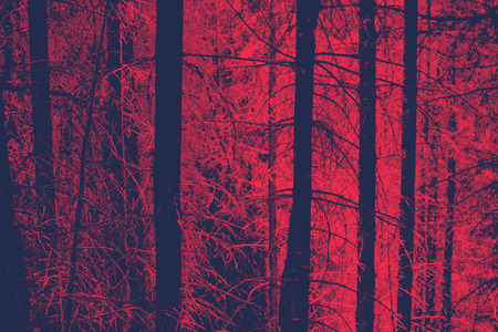 moody: Red Toned Image of Bare Tree Trunks in Evergreen Forest with Eerie Mood, Ideal for Backgrounds